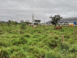 Em Parauapebas, fazendeiros utilizam área pública da prefeitura para pastagem de animais
