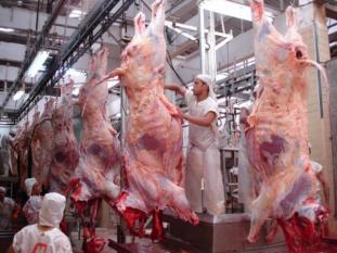 Cai o número de abate de bovinos no Pará de 2018 para 2019