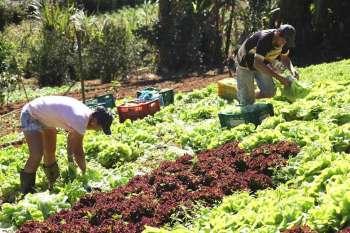 Xinguara lança chamada para comprar quase R$ 3 milhões de agricultores