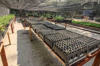 Redenção: Ideflor-Bio inaugura primeiro Viveiro Florestal em Parque Natural
