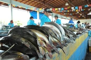 Marabá: Vigilância Sanitária tranquiliza população sobre o consumo de pescado