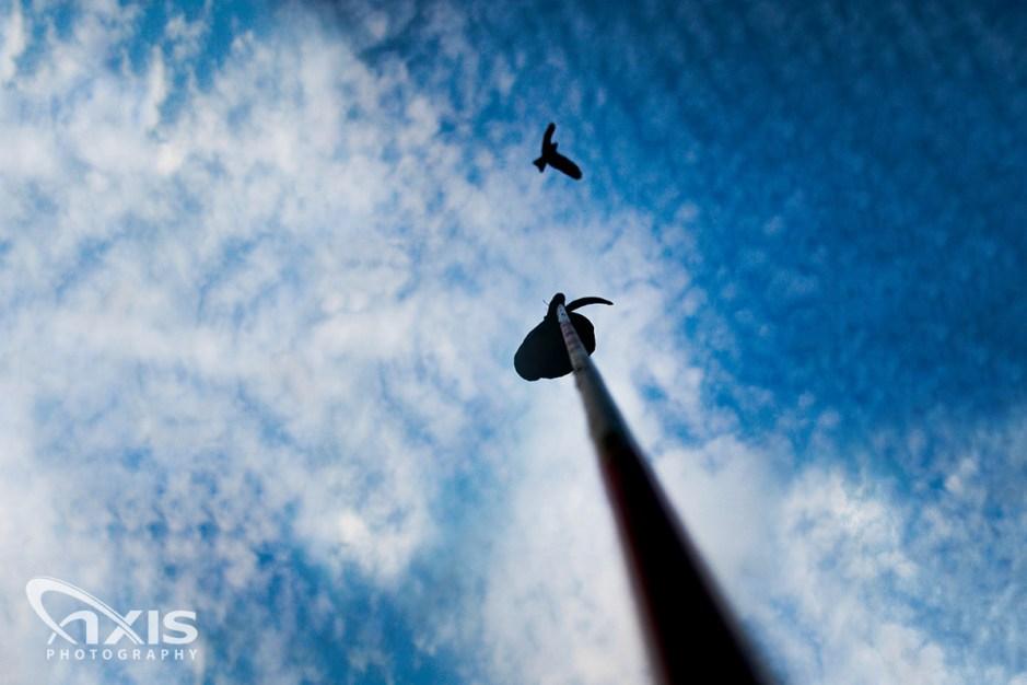 bird-over-rpgcc-01