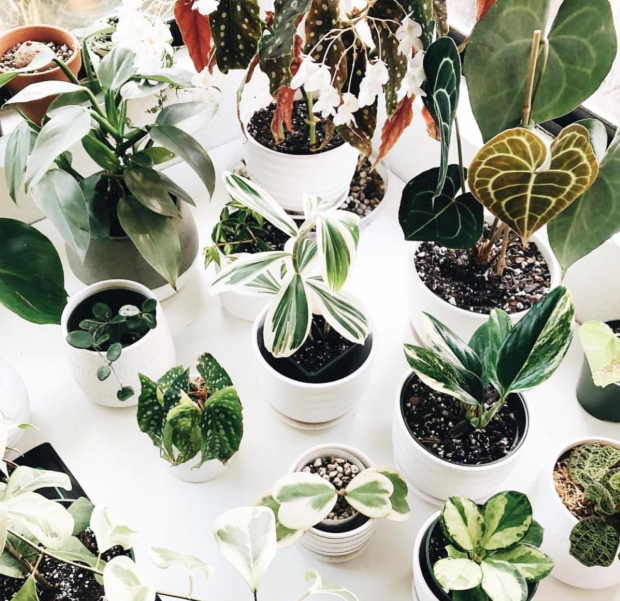 forever planty the potted jungle feel lifestyle blog luxury instagram