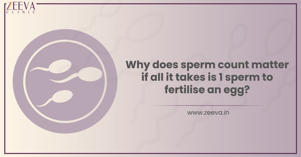 Sperm to fertilise an egg