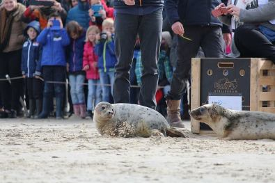 20160327-renesse-vrijlating-02