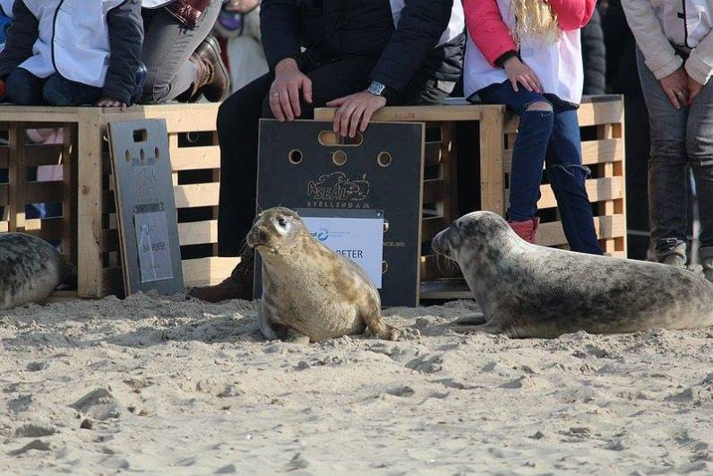20160327-renesse-vrijlating-12