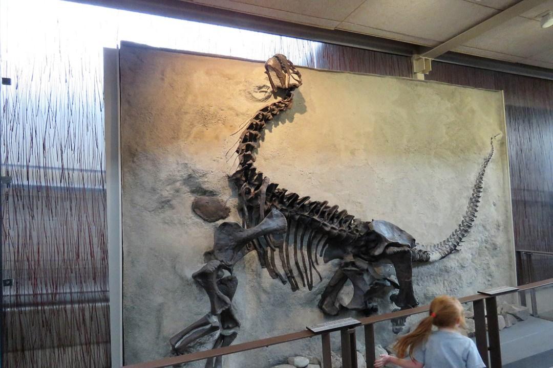 Tommy Pützstück Dinosaur National Monument 2018