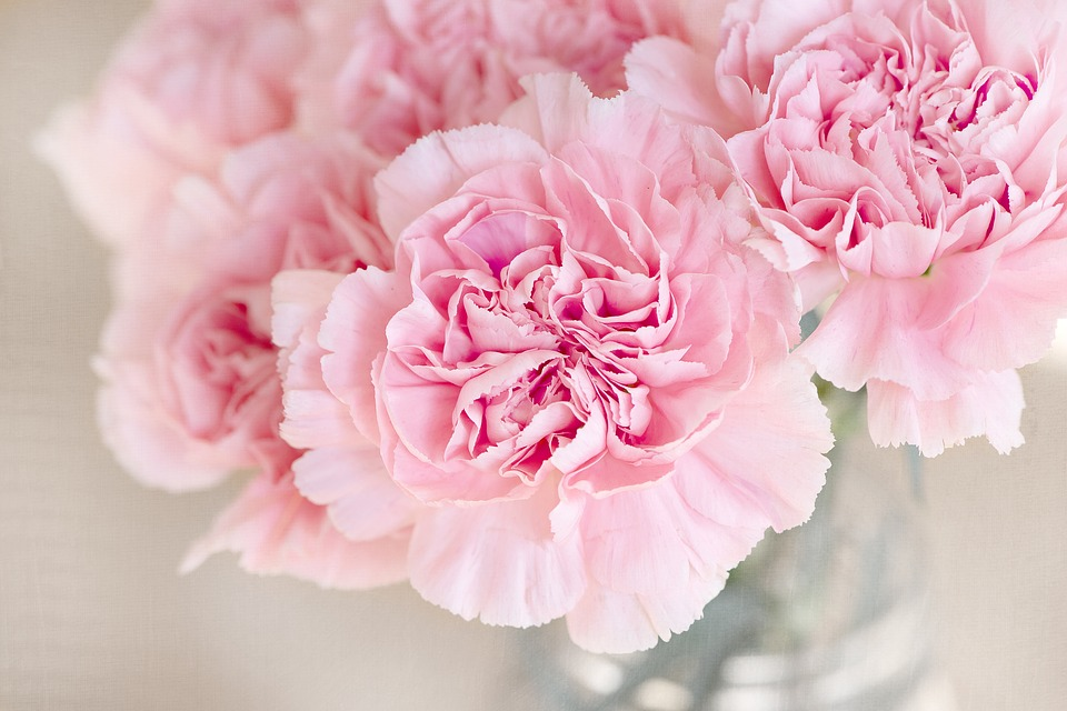 fleur rose article