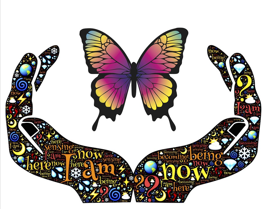image-main-papillon
