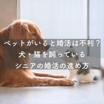 ペットがいると婚活は不利?犬・猫を飼っているシニアの婚活の進め方