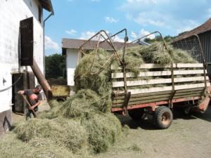 Heuernte Heu gabeln Bauernhofurlaub