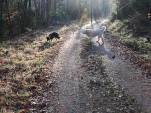 Hunde Sonne Zeltnerhof