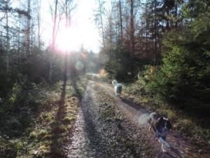 Hunde Spaziergang Bauernhof
