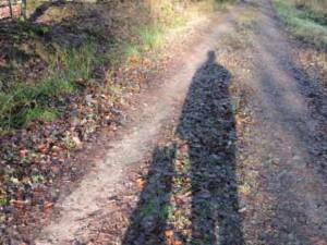 Schattenspiel Hund, Bauernhofurlaub