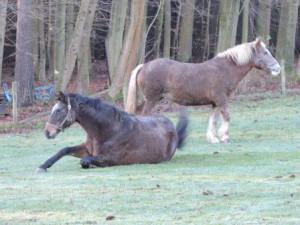 Zeltnerhof Pferd wälzt sich