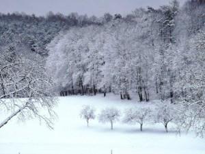 Schnee auf dem Bauernhof, Klingenbuckel