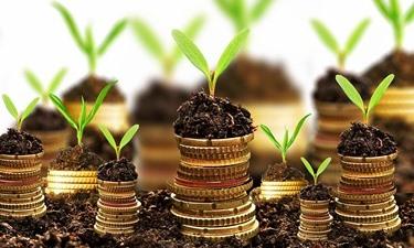 Come investire nelle Pim ed ottenere rendimenti interessanti
