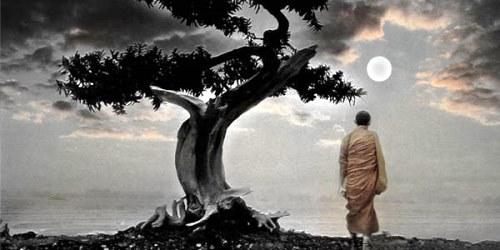 Storia Zen: il cieco e la voglia di primavera!