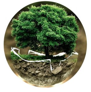 Environnement et levier managerial