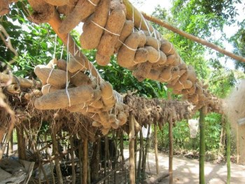 Yam Farming business in Nigeria