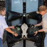 Praktik manajemen sapi perah, salah satu yang umum dilakukan di jurusan Peternakan