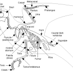 ciri ciri burung dan struktur tubuh aves