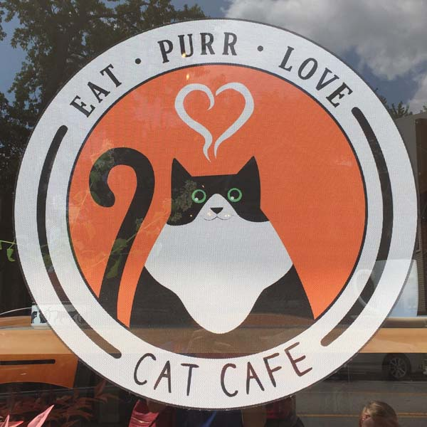 Eat, Purr, Love - The Coolest Cat Cafe In Columbus