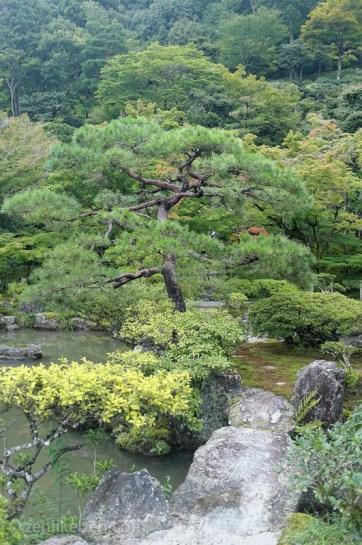 A beautiful tree at Ginkaku-ji