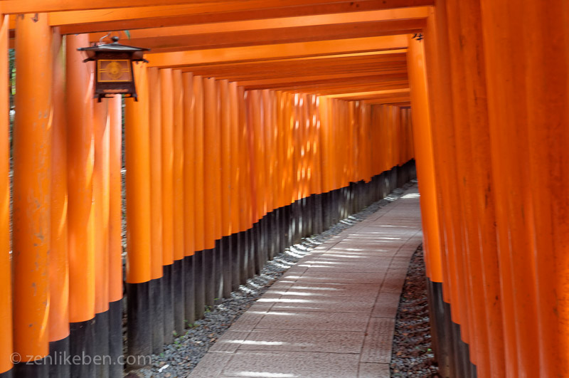 The many torii of Fushimi Inari-taisha