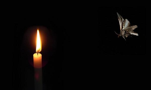 A moth to a flame   Zenni Optical
