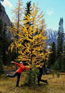 We love larches at Taylor Lake, Banff