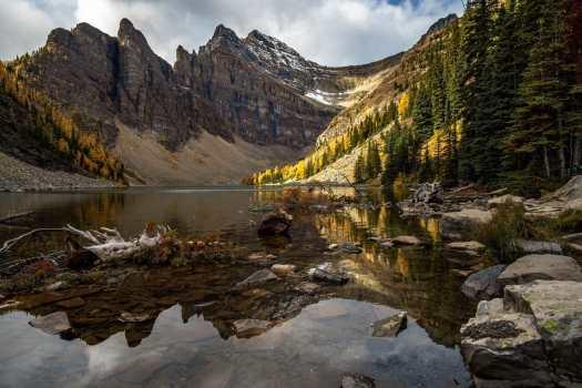 Larches at Lake Agnes