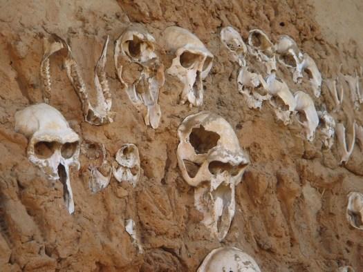 Skulls in Dogon Country