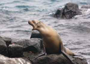 Sea Lions are easy to see on land based travel of the Galapagos Islands
