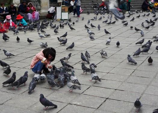 Girl feeding pigeons in Plaza Murillo La Paz
