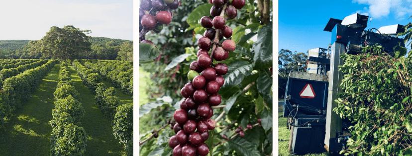 Zentvelds ripe fruit turning naturals