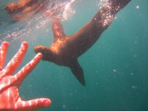 Baja, a paradise for water lovers