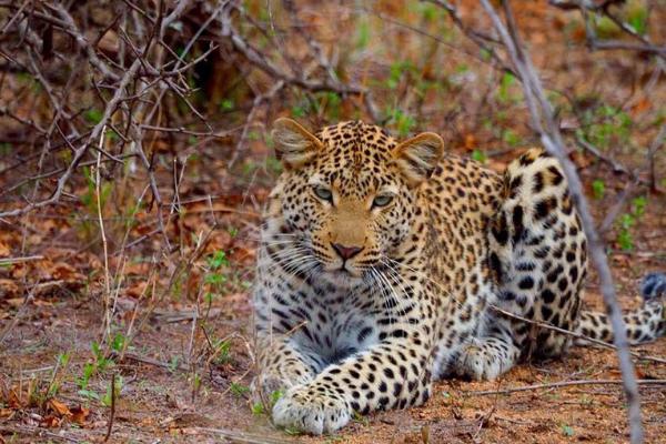 Exploring South Africa Safari Cheetah