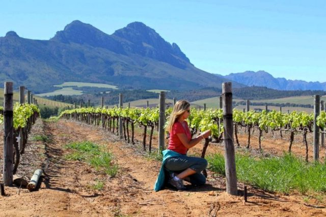 Exploring South Africa Wine