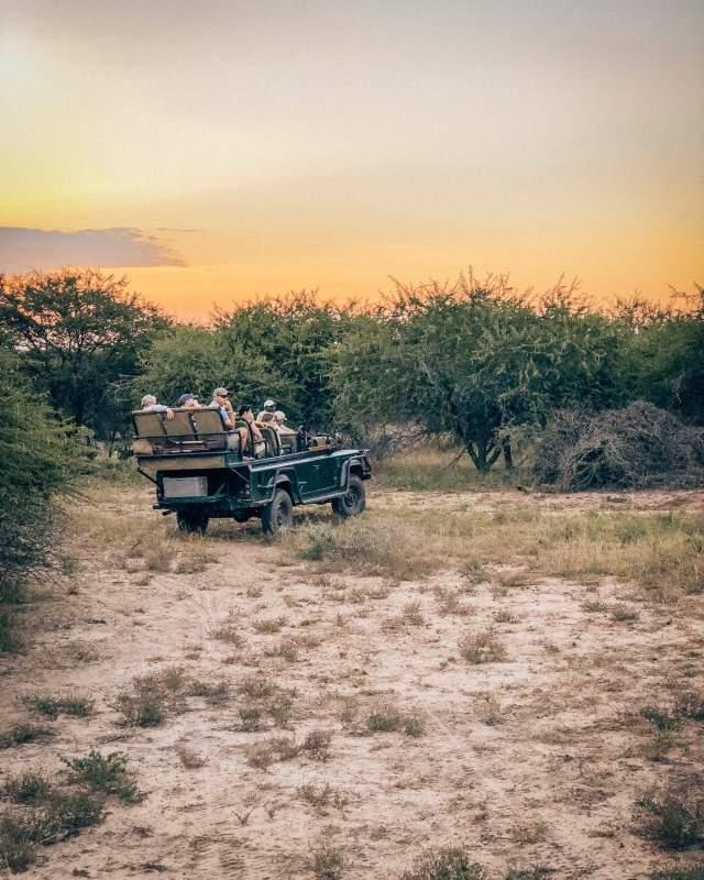 South Africa Safari Thornybush