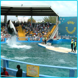 Miami - Sea World