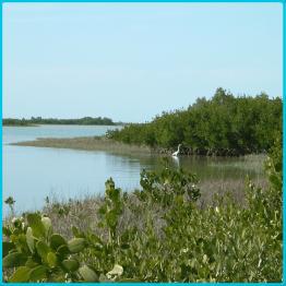 Honeymoon Island Naturschutz Park