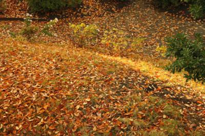 秋の山道も紅葉の落葉