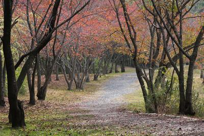 秋の公園の紅葉樹林