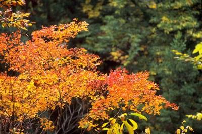 秋の素敵な紅葉