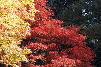秋の紅葉と自然と!