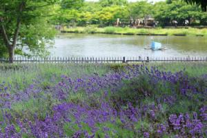 初夏のれんげと緑と大池