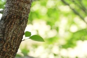 初夏の木洩れ日