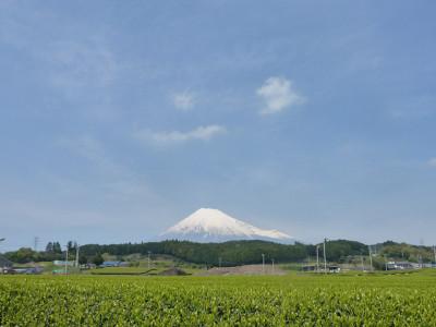 初夏の富士山とお茶畑