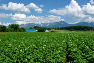 夏の晴れた日の山々と青い野菜たち
